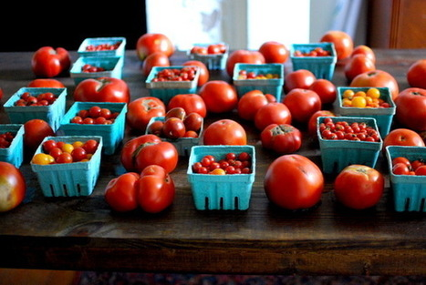The Yellow House » Foibles of local eating (& tomatoes, many ways) | thinking about food | Scoop.it