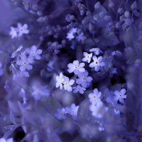 Epic of blue flower | Great Photographs | Scoop.it