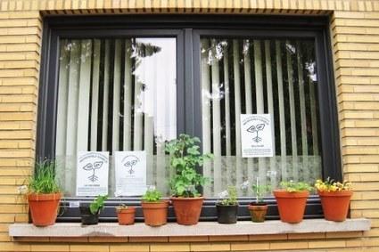 Un coin de fenêtre, quelques incroyables comestibles en jardinière, une affiche : vous aussi devenez d'Incroyables Motivés | Côté Jardin | Scoop.it