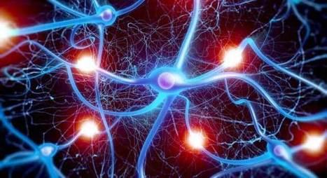 Autismo: descubierta mutación genética que retarda la actividad cerebral   Dificultades del aprendizaje   Scoop.it
