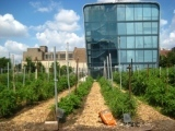 Urban Agriculture: Overcoming the Legacy of a City's Past | forest gardening | Scoop.it
