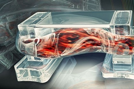 Researchers Develop Muscle Powered Biorobots | Cell Therapy & Regenerative Medicine | Scoop.it