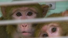 Los secretos de un laboratorio de monos   Ciencia, política y Derecho   Scoop.it