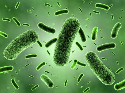 Scientists resolve debate over how many bacteria fight off invaders | mikrobiologija | Scoop.it