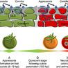 Fungi @ mycology