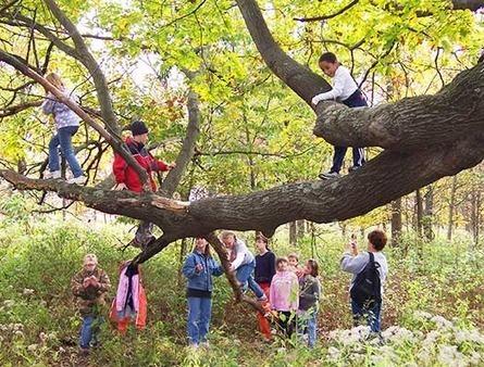 But…Isn't It Dangerous? Risk and Reward in Nature Play : Riverhabitat | The ECE Outdoor Classroom | Scoop.it