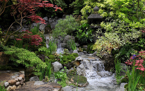 Chelsea Flower Show draws to a close | Auriculas and  other Gardening topics | Scoop.it