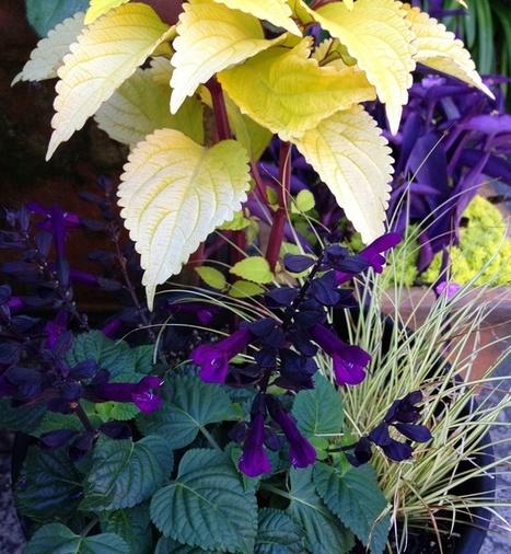 Foliage & Flower Frenzy | Container Garden Cornucopia | Scoop.it
