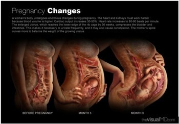 The Beautiful And Efficient Anatomy Of Pregnancy | REAL World Wellness | Scoop.it