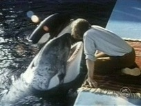 The Tyee – How Not to Ship a Whale | Animals in captivity - Zoo, circus, marine park, etc.. | Scoop.it