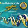 Genomique