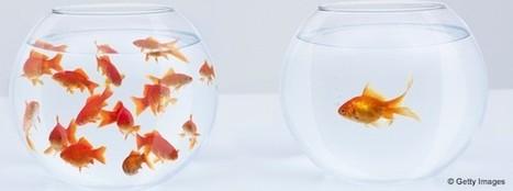 Pourquoi les «hauts potentiels» ont parfois du mal à s'intégrer - HBR | Ressources Humaines | Scoop.it