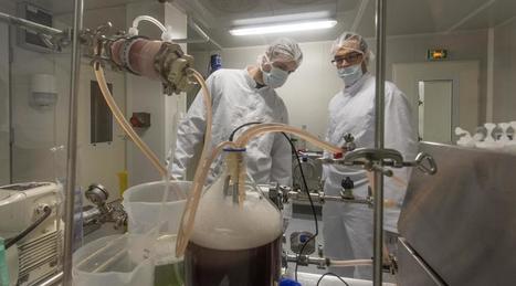 Biotechnologie : un trophée anticipe le succès mondial du labo Hemarina | Vous avez dit Innovation ? | Scoop.it