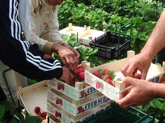 La récolte des fruits et légumes de printemps menacée