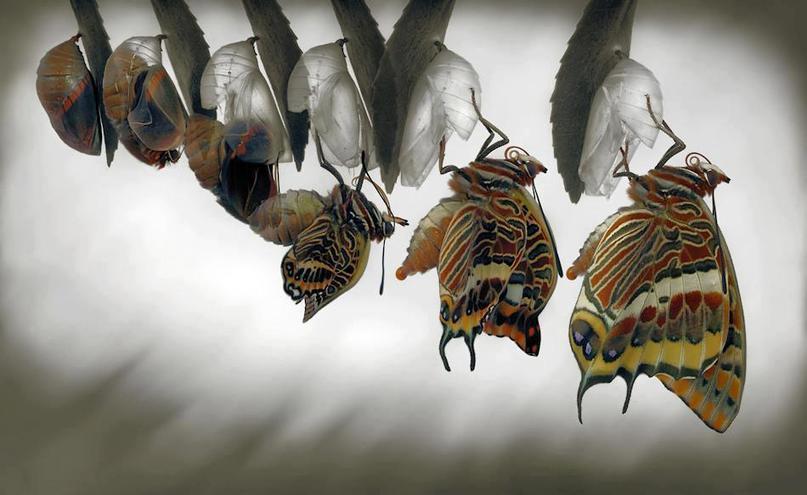 Αποτέλεσμα εικόνας για πεταλουδα κουκουλι