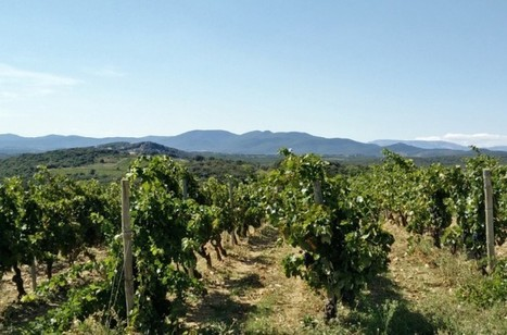 Le vin bio, chiffres et tendances | Grande Passione | Scoop.it