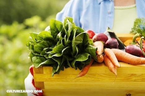 10 razones para preferir la comida orgánica | Permacultura y autosuficiencia | Scoop.it