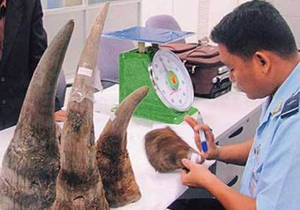 Medical opinion could help save rhinos - VietNamNet Bridge | Save our Rhino and all animals...this is what it looks like!!!!! | Scoop.it