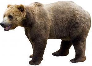 Chine. Un ours attaque un singe tombé de vélo dans un zoo | Mais n'importe quoi ! | Scoop.it
