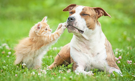 dogs are better companions than cats