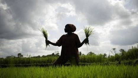 10 reasons to invest bigger and better in agriculture in Africa | Oxfam International Blogs | Agriculture, Climate & Food security | Scoop.it