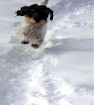 Awakenings: Winter Awakenings - Dogs in the snow   enjoy yourself   Scoop.it