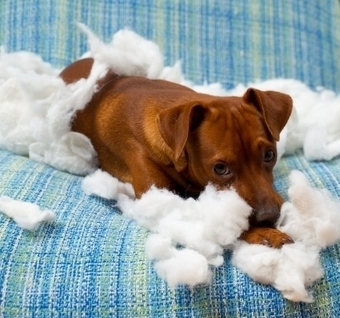 Tips for Stopping Your Dog's Destructive Chewing | Pets | Scoop.it