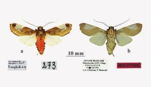 Papillons de Guyane : l'inventaire se poursuit, avec 21 nouvelles espèces décrites | Biodiversité & Relations Homme - Nature - Environnement : Un Scoop.it du Muséum de Toulouse | Scoop.it