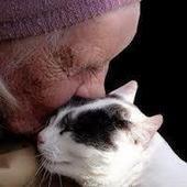 The Eyes of Love   catnipoflife   Scoop.it
