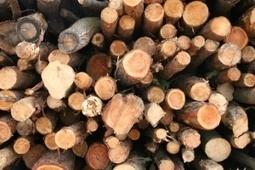Schémas biomasse : les préfets de régionsont les cartes en main – Énergie – Environnement-magazine.fr | Innovation Agro-activités et Bio-industries | Scoop.it