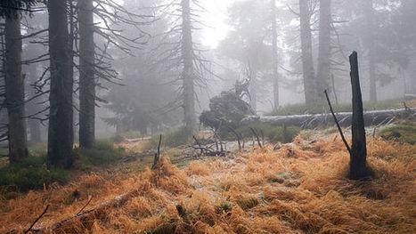 Němci chtějí část země změnit v divočinu | Milujem prírodu | Scoop.it