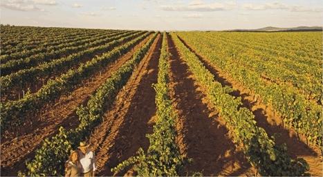 Wines - Monte da Comenda Grande | Portuguese Wine Producers | Scoop.it