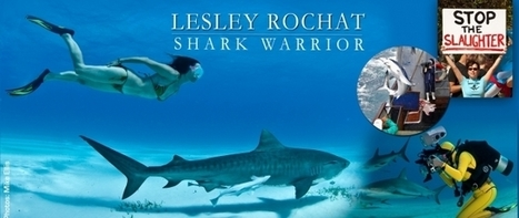 Freediving with Sharks – Lesley Rochat | ediving | Scoop.it