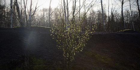 Une vie au vert sur un noir terril   Les colocs du jardin   Scoop.it