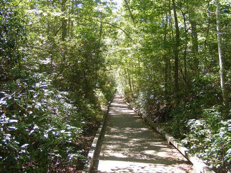Swamp Trail boardwalk at Atlantic County Park reopens after Hurricane Sandy | Hurricane Sandy Exploring Implications | Scoop.it