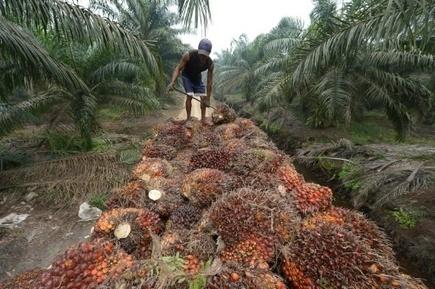 HSBC finance la destruction de forêt tropicale, selon Greenpeace - Magazine GoodPlanet Info | Biodiversité | Scoop.it