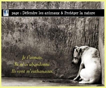 """Résultat de recherche d'images pour """"français maltraités"""""""