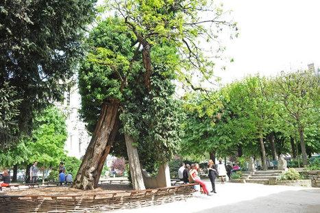Les arbres remarquables à Paris   Nature et urbanisme   Scoop.it