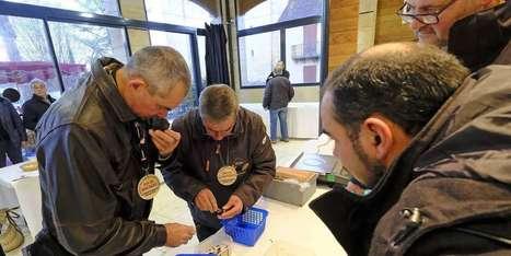 Y aura-t-il des truffes à Noël cette année? | Agriculture en Dordogne | Scoop.it