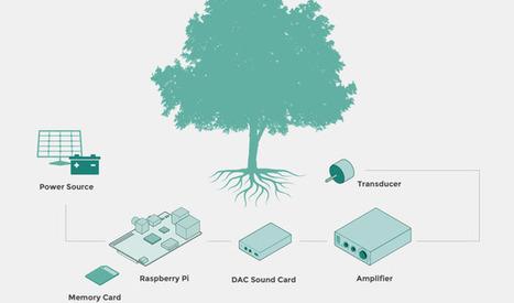 RIDM - Listen Trees | DESARTSONNANTS - CRÉATION SONORE ET ENVIRONNEMENT - ENVIRONMENTAL SOUND ART - PAYSAGES ET ECOLOGIE SONORE | Scoop.it