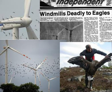 Wind Turbines: Is it OK to slaughter hundreds of thousands of birds, bats every year in the name of clean energy? | CLIMATE CHANGE WILL IMPACT US ALL | Scoop.it