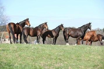 Do Horses Feel Empathy? | Empathy and Animals | Scoop.it