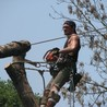 Moore Tree Service LLC