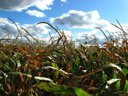 Gol de Monsanto al gobierno estadounidense para continuar con ... - euroXpress | Stop Monsanto | Scoop.it