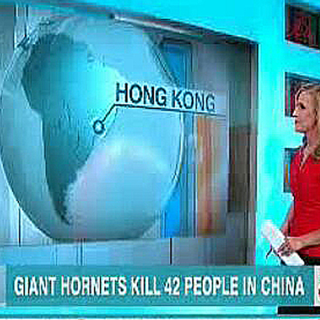 CNN has an update on the scary giant hornets in Brazil ... er, China | Life in Brazil | Scoop.it