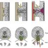 plant small RNAs