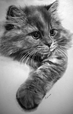 Incredible Photorealistic Pencil Drawings of Cats | Visual Inspiration | Scoop.it