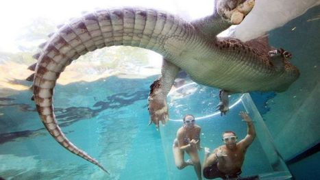 Go swimming with crocodiles in Australia's 'Cage of Death' | Xposed | Scoop.it
