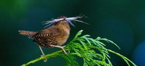 L'urbanisation pousse des oiseaux au divorce | Biodiversité | Scoop.it