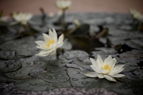 Treating Chronic Pain With Meditation | Mindfulness and Meditation | Scoop.it
